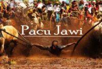 Jadwal Pacu Jawi